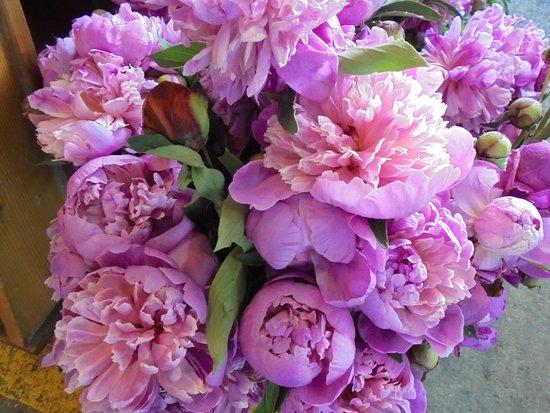 Flores Lindas E Diferentes Picture Of Marche Du Vieux Port De