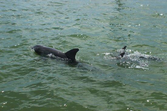 Dolphin Landings Charter Boat Center: IMG_0486_large.jpg