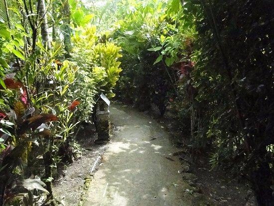 Atlantida Lodge: Los caminos que conducen a las habitaciones