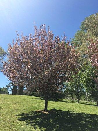 Canton, GA: Trees
