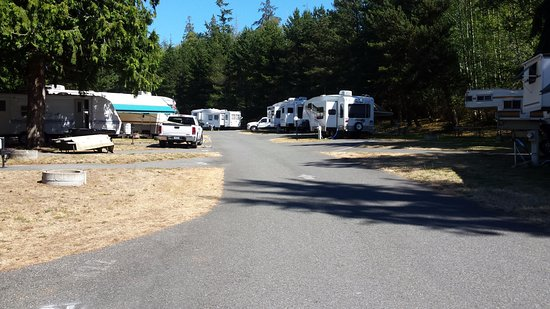 North Whidbey RV Park : row of rvs