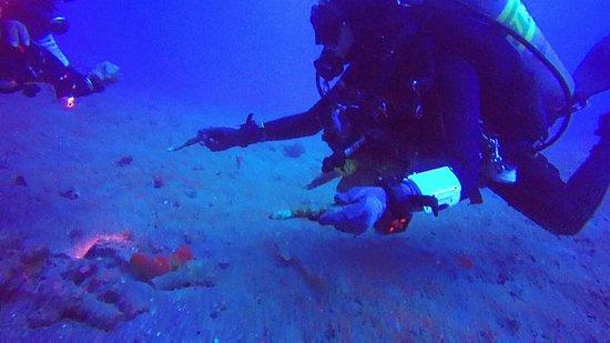Blue Marlin Dive Gili Trawangan: IMG_20160814_160954_large.jpg