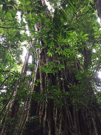 Provincia de Chiriquí, Panamá: photo1.jpg