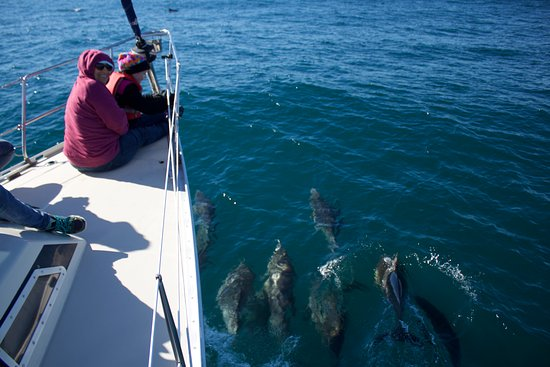 Avila Beach, CA: Dolphins leading us out to sea