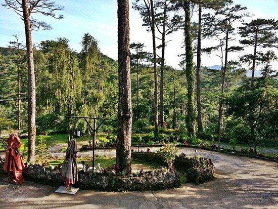 Safari Lodge: Garden
