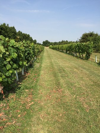 Linton, UK : Lovely in the sunshine. Great wine tasting experience, very knowledgeable staff.