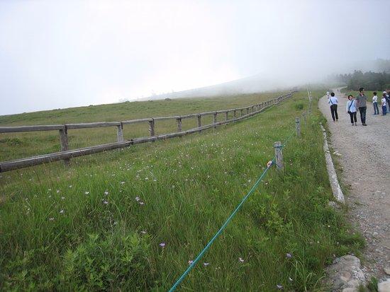 Prefectura de Nagano, Japón: 美ヶ原パノラマコース