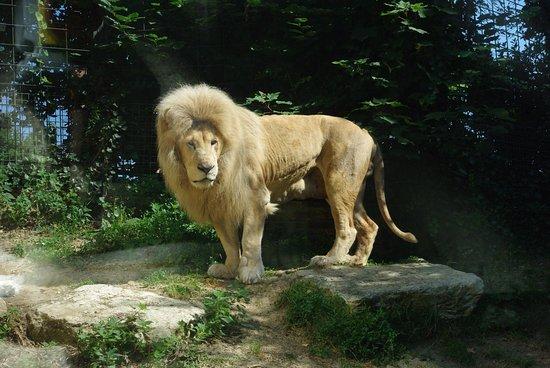 La serrerie b b thenay france voir les tarifs 50 for Appart hotel zoo de beauval