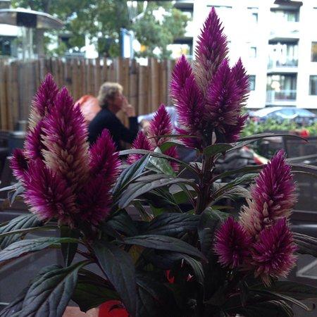 Bloemendaal, Países Bajos: Прекрасный спокойный по утрам и громкий по вечерам ресторанчик, абсолютно такой же приятный как