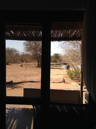 Timbavati Private Nature Reserve, Republika Południowej Afryki: View of watering hole from room 1