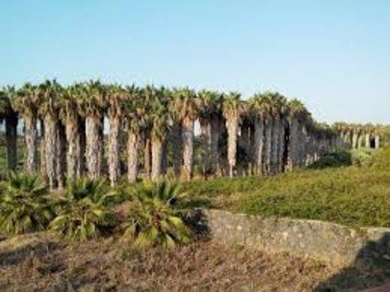 Fiumefreddo di Sicilia, Italien: palmeto
