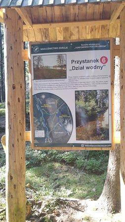 West-Polen, Polen: Torfowisko pod Zielencem