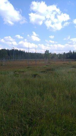 Oeste de Polonia, Polonia: Torfowisko pod Zielencem