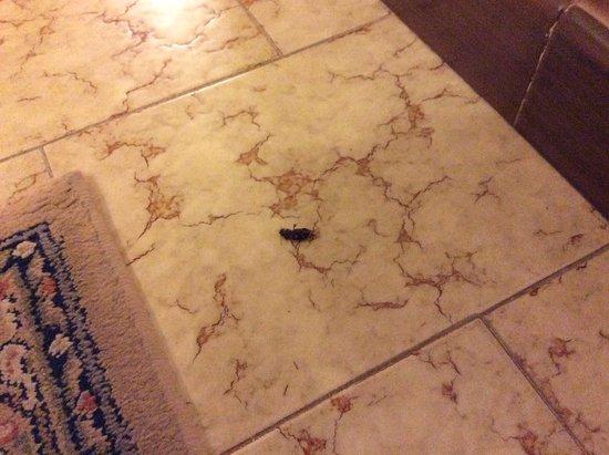 Prossedi, Italia: scarafaggio