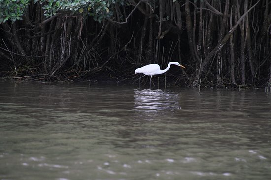Daintree, Australia: So much to see on the river.