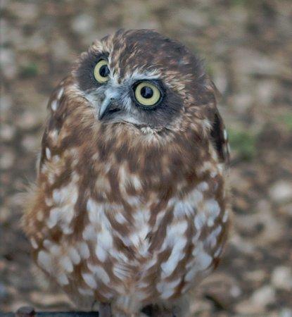 Ramsgate, UK: Cute little owl on display