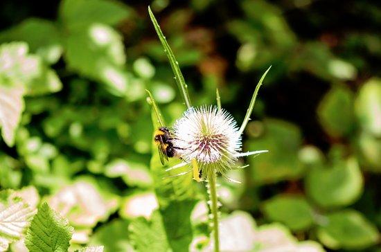 Ramsgate, UK: erm, it's a bee :)