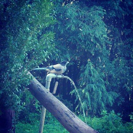Pangot, India: IMG_20160816_131903_large.jpg