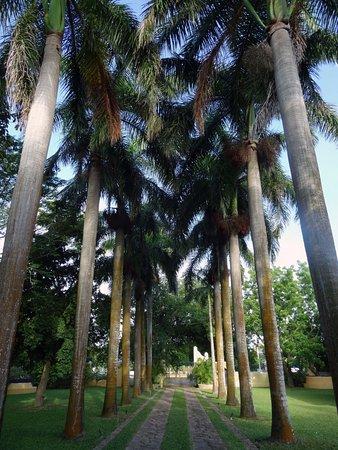 Hacienda Xcanatun: Jardins - Allee principale de la propriété