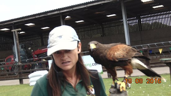 Stockley Farm Birds of Prey Centre Foto