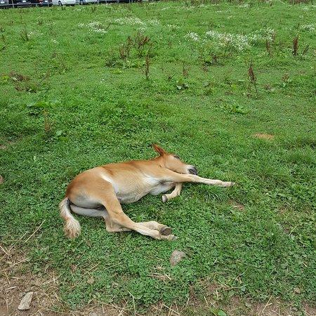 Nagawa-machi, Japan: 可愛い子馬寝てました
