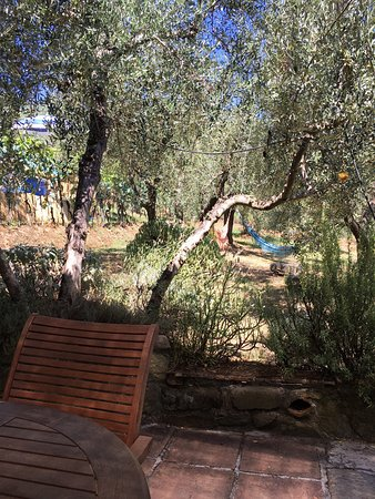 Nonna Mora: Wonderful Olive groves and vegetables from the owners garden.
