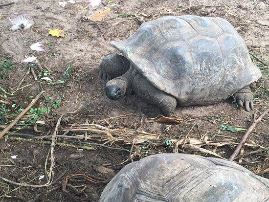 Chez Batista Villas: The turtles!