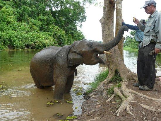 Sayaboury, Laos: elephant avec le cornac