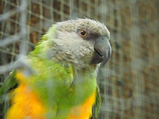 Chateau-Gontier, Francia: Des perroquets curieux