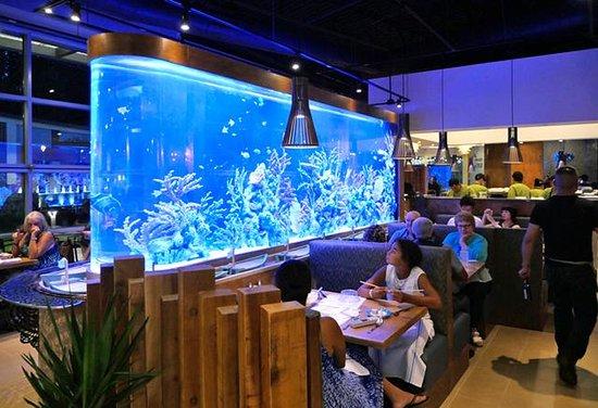 Sterling, Virginie : Ocean Blue Aquarium