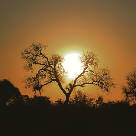 Elephant Plains Game Lodge: Safari Sunset