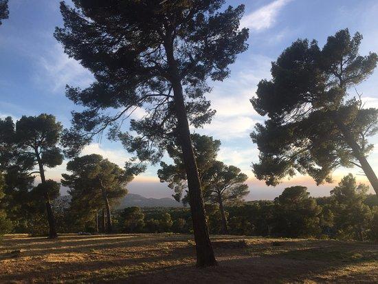 Ceyreste, Francia: vue du bungalow en lisière de camping