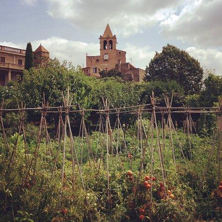 La Placa de Madremanya: Tomatoes in the vegetable garden