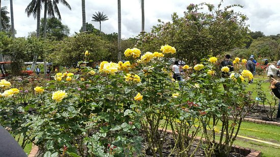 Jardin Botanico Jose Celestino Mutis: 20160815_132856_large.jpg
