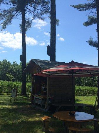 Moultonborough, NH: Angelic Farm PYO Blueberries