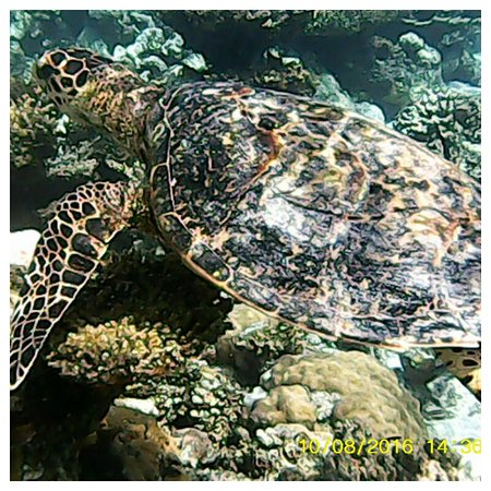 Eriyadu Island Resort: Love Swimming with the turtle