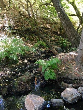 Scotts Valley, CA: Quiet spot off the road...