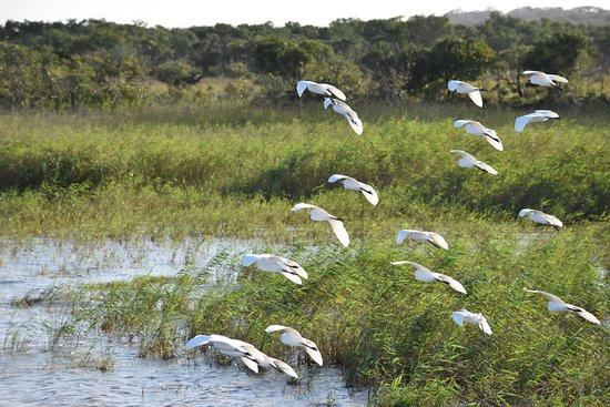 St Lucia, Sudafrica: Oiseau