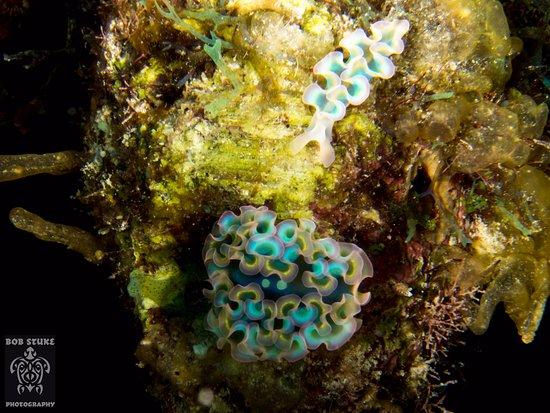 Captain Don's Habitat: Lettuce Sea Slug