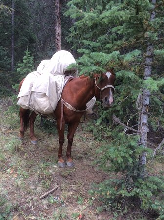 Dubois, WY: Cherry, a pack horse