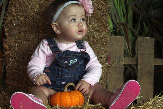 Media, PA: Babies and Pumpkins 2015