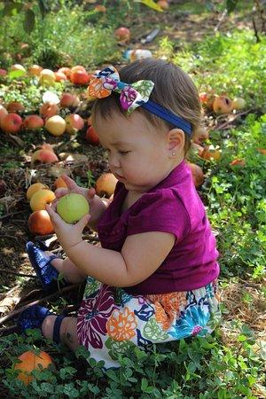 Media, PA: Apples