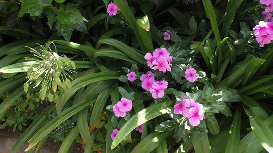Bluhende Pflanzen Bild Von Loro Parque Puerto De La Cruz