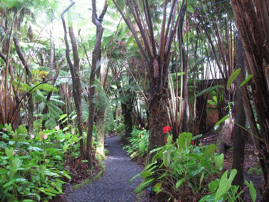 Volcano Inn: Pathway to our cabin, very idyllic!!