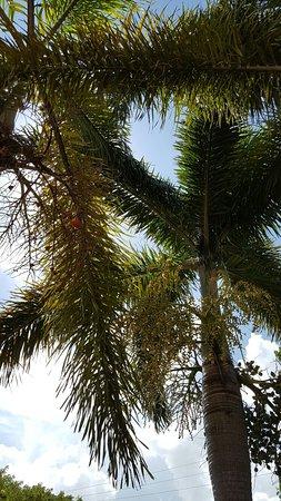 Miami Springs, FL: 20160818_110449_large.jpg