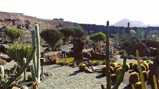 Jardin de cactus restaurant picture of jardin de cactus for Jardines con cactus