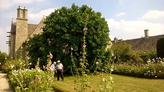 Gorgeous mulberry tree in the garden of Kelmscott Manor
