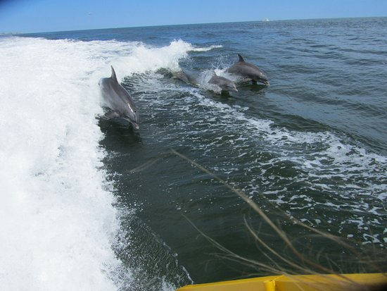 Wildwood Crest, Nueva Jersey: Dolphins chasing the boat!
