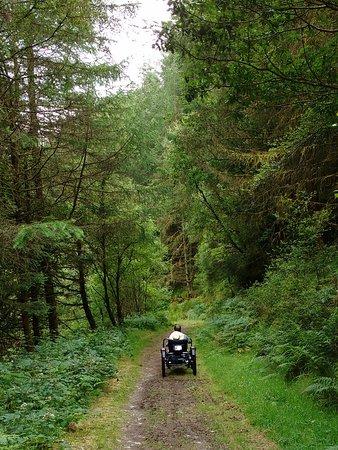 Llanllwni, UK: Brechfa forest walk