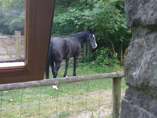 Llanllwni, UK: Just outside room